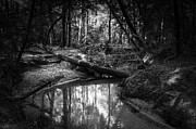 Www.restlesslightphotography.com Posters - Secluded Creek Poster by Lynn Palmer