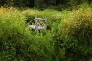 Benches Photos - Seclusion by Bill  Wakeley