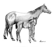Bay Horse Drawings - Second Generation by Kayleigh Semeniuk