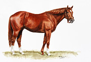 Thomas Drawings Posters - Secretariat Study Poster by Thomas Allen Pauly