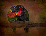 Lorikeet Photos - Secrets by Susan Candelario