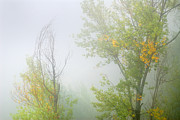 Yellow Leaves Posters - Secrets trees in fog Poster by Guido Montanes Castillo