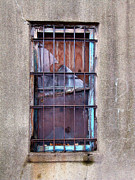 Window Bars Prints - Security Window Print by Alan Russo