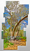 Sedona Arizona Big Tree Print by Gregory Dyer