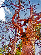 Sedona Arizona Ghost Tree Print by Gregory Dyer