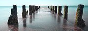 Cape Cod Photography Posters - See-Green Old Pier Panorama Poster by Dapixara