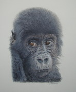 Gorilla Drawings - See no evil. by Gary Fernandez