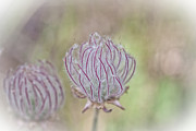 Pods Originals - Seed Pods by Kati Tomlinson