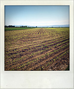 Crop Lines Art - Seedlings in paddock by Les Cunliffe