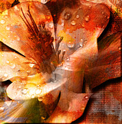 Photos With Red Mixed Media Prints - Seeds II Print by Yanni Theodorou