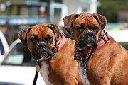 Perros Photos - Seeing Double by Wendi Evans