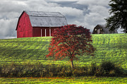 Tennessee Barn Prints - Seeing Red Print by Debra and Dave Vanderlaan