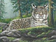 """bobcat "" Paintings - Seeing Spots by Misty Walkup"