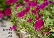 Scripture Reading Prints - Seek the Lord and Live Print by Sandra Clark