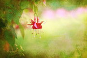 Seeking The Light Print by Reflective Moments  Photography and Digital Art Images
