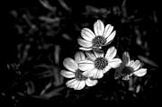 Jeff Burton - Seeking the Sunlight