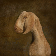 Goat Digital Art Metal Prints - Self Portrait Metal Print by Jeff Burgess