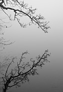 Meeting Branches Prints - Self-Reflection Print by Luke Moore
