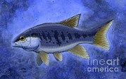 Scale Digital Art - Semionotus Flag-back, An Extinct Genus by H. Kyoht Luterman