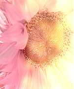 Sunflower Art Posters - Sensual Sunflower Bloom Poster by Debra  Miller