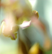 Flora Art Prints - Sensual Touch of Exotic. Orchid II Print by Jenny Rainbow