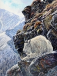 Mountain Goat Painting Prints - Sentinel of the Canyon Print by Steve Spencer