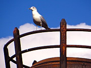 Sea Platform Prints - Sentinel Sea Gull Print by Photography  By Joy