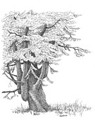 Pen And Ink Art Drawings Framed Prints - Sentinel Tree Framed Print by Renee Forth Fukumoto