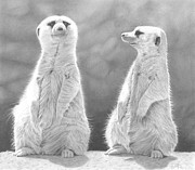Meerkat Drawings - Sentinels by Laura Rohlfing