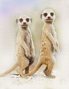 Meerkat Digital Art Prints - Sentinels Print by Robert Foster