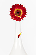 Flower Still Life Posters - Separation Poster by David Bowman