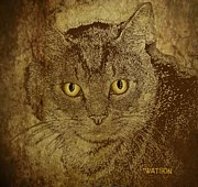 Cat Prints Digital Art Framed Prints - Sepia Cat Framed Print by Marlene Watson