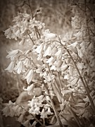 Neurotic Images Photography Prints - Sepia Flowers Print by Chalet Roome-Rigdon