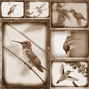 Flying Birds Prints - Sepia Hummingbird Collage Print by Carol Groenen