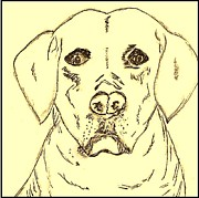Dog Portrait Art - Sepia Lab - Lovin the Lab by Eloise Schneider