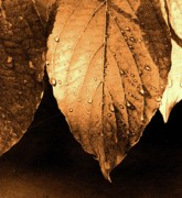 Addie Hocynec Art Photos - Sepia Leaves by Addie Hocynec