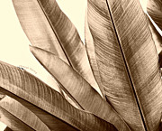 Hotel Wall Art Framed Prints - Sepia Leaves Framed Print by Cheryl Young