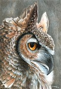Colored Pencil Framed Prints - Sepia Owl Framed Print by Carla Kurt