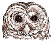 Sepia Ink Drawings - Sepia Pen and Ink Owl Drawing by Heather Davis