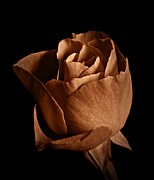 Neurotic Images Photography Prints - Sepia Rose Portrait 1 Print by Chalet Roome-Rigdon