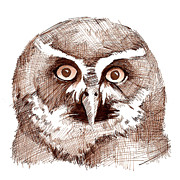 Sepia Ink Drawings - Sepia Toned Owl Drawing by Heather Davis