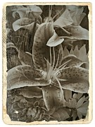 Neurotic Images Photography Prints - Sepia Vintage Stargazer 1 Print by Chalet Roome-Rigdon