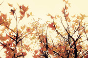 Fall Leaves Prints - September Song Print by Amy Tyler