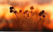 All - September Sonlight by R Thomas Brass