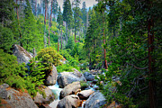 Rock Spring Trail Prints - Sequoia Stream Print by Heidi Smith
