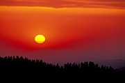 Russ Bishop - Sequoia Sunset