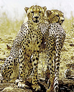 Cheetahs Digital Art Posters - Serengeti Cheetahs 2 Poster by Larry Linton
