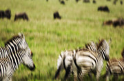 Repetition Photo Originals - Serengeti Migration Blurr - 4647 by Amyn Nasser