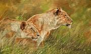 Serengeti Sisters Print by David Stribbling