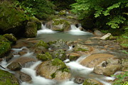 Stream Photos - Serenity Is a Brook by Aaron S Bedell
